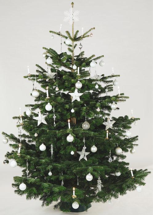 Weihnachtsbaum Herkunft.Duden Christbaum Rechtschreibung Bedeutung Definition Herkunft