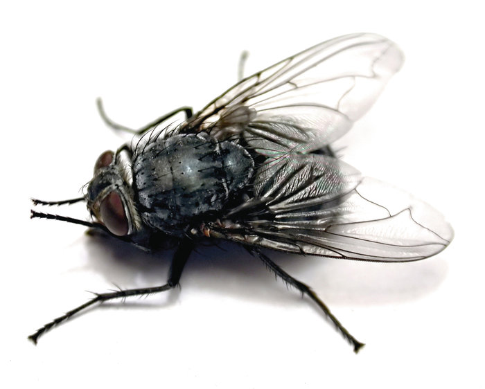 Definition Fliegen