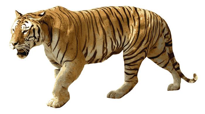 Duden Tiger Rechtschreibung Bedeutung Definition Herkunft