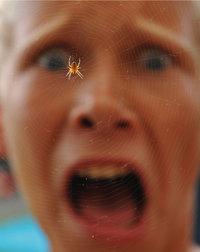 Angst - Kind, das Angst vor einer Spinne hat