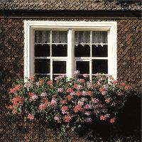 Balkonpflanze