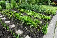Beet - Beet, auf dem Gemüse angebaut wird