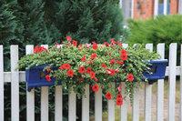 Blumenkasten - Blumen in einem Blumenkasten