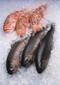 Fang - Fischfang