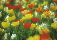 Frühling - Blumenwiese im Frühling