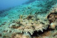 Grund - Grund des Meeres