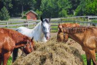 Heu - Heu als Pferdefutter