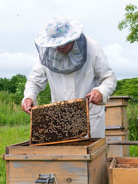 Imker - Imker mit Bienenwabe
