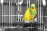 Käfig - Vogel in einem Käfig