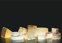 Käse - Verschiedene Käsesorten