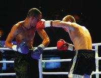 Kampf - Kampf zweier Boxer