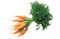Karotte - Ein Bund Karotten