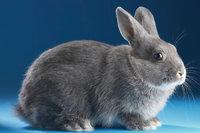 Kleintier - Kaninchen