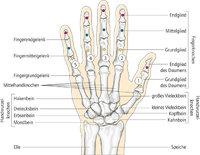 Knochen - Knochen einer Hand