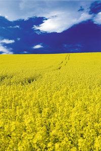 Kontrastfarbe - Blau und Gelb als Kontrastfarben