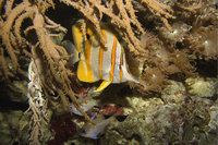 Korallenbank