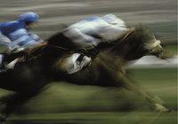 Länge - Rennpferd mit einer halben Länge Vorsprung