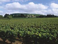 Lage - Lage eines Weinanbaugebiets