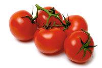 Liebesapfel - Tomaten
