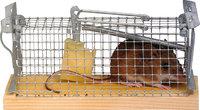 Mausefalle - Eine Maus in einer Mausefalle