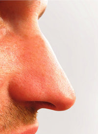 Nasenflügel