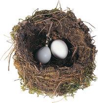 Nest - Nest mit Eiern