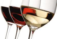 Rebensaft - Verschiedene Weinsorten in Weingläsern