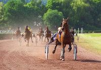 Rennplatz - Pferde auf einer Rennbahn