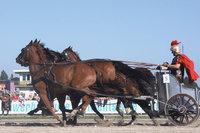 Rennwagen - Ein von Pferden gezogener Rennwagen