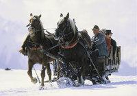 Schlitten - Von Pferden gezogener Schlitten