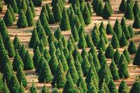 Schule - Zahlreiche Bäume einer Schule