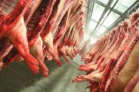 Schweinehälfte - Schweinehälften in einer Schlachterei