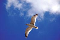 Seevogel - Möwe