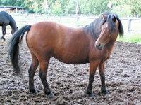 Seite - Rechte Seite eines Ponys