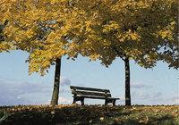 Sitzbank - Sitzbank unter Bäumen