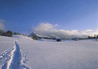 Spur - Spur im Schnee