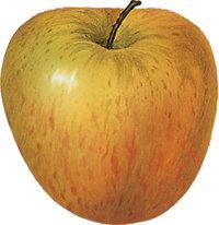 Stiel - Apfel mit Stiel