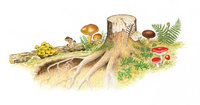 Stock - Stock und Pilze