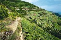 Terrasse - Für den Weinbau angelegte Terrassen