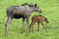 Tier - Tier und Junges
