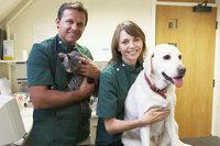 Tierarzt - Tierärzte mit Patienten