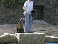 Tierpfleger - Tierpfleger bei der Fütterung von Robben