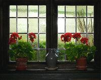 Topfblume - Topfblumen am Fenster