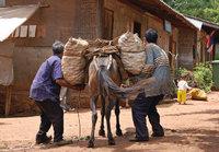 Tragtier - Bauern mit Muli