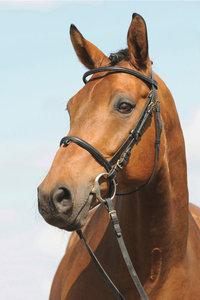 Trense - Ein Pferd mit Trensenzaum