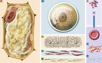 Vielfalt - Die Vielfalt der Zellformen