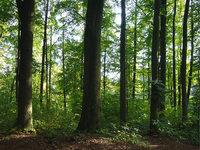 Waldstück
