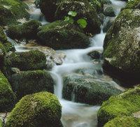 Wasser - Wasser eines Baches