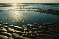 Wattenküste
