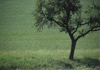 Wiese - Baum auf einer Wiese